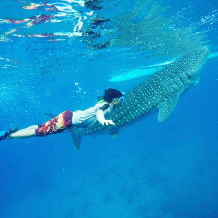 (ジンベイザメと泳ぐ